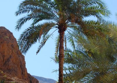 oman-highlight-wadi-shab-schwimmen (23)