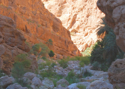oman-highlight-wadi-shab-schwimmen (25)