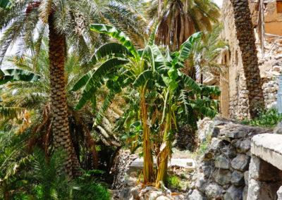oman-misfat-al-abriyyin-rundfahrt-falaj-palmen