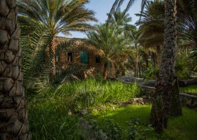 oman-misfat-al-abriyyin-rundfahrt-landwirtschaft-felder