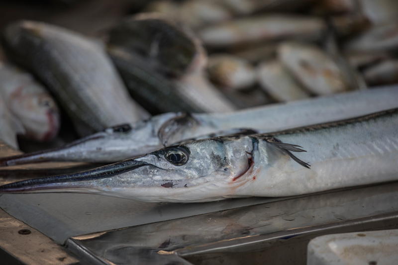 oman-muscat-mutrah-fischmarkt-souq-auslage