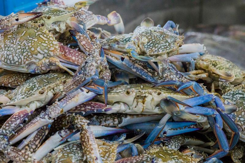 oman-muscat-mutrah-fischmarkt-souq-essen-krabben