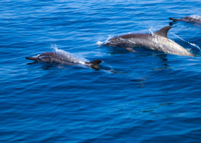 oman-reise-bootstour-delfine
