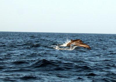 oman-reise-bootstour-delfintour
