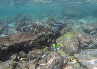 oman-reise-bootstour-fische-unterwasser