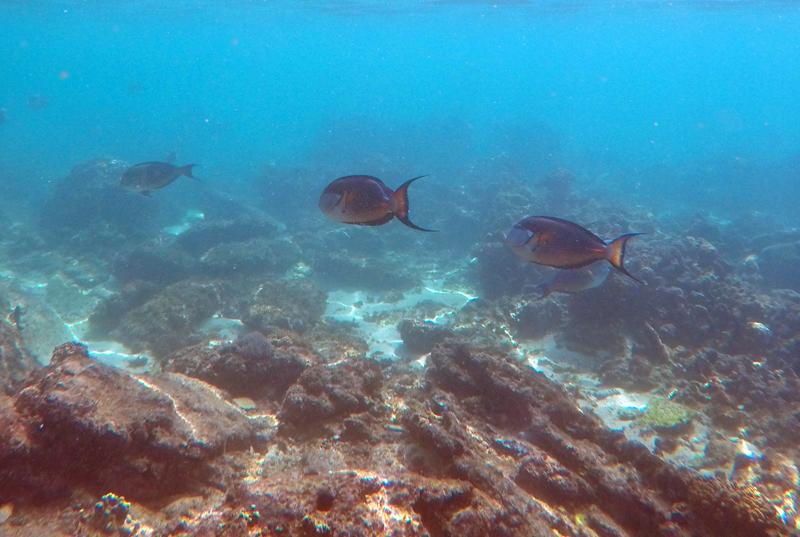 oman-reise-bootstour-korallenriff-fische