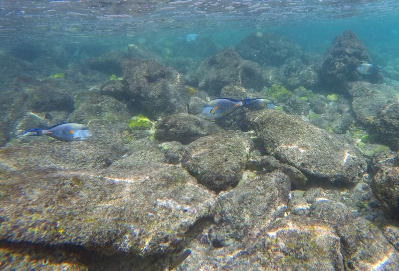 oman-reise-bootstour-schnorcheln-fische-korallenriff