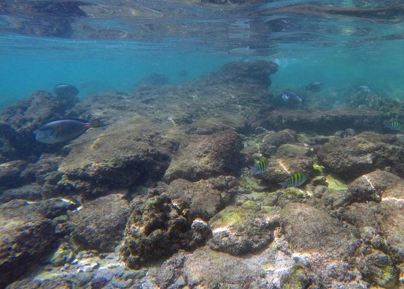 oman-reise-bootstour-unterwasserwelt
