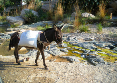 oman-rundreise-offroad-wadi-tiwi-esel