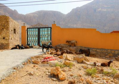 oman-rundreise-offroad-wadi-tiwi (2)