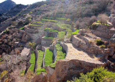 oman-sayq-plateau-jabal-al-akhdar-felder-terrasse-rundreise