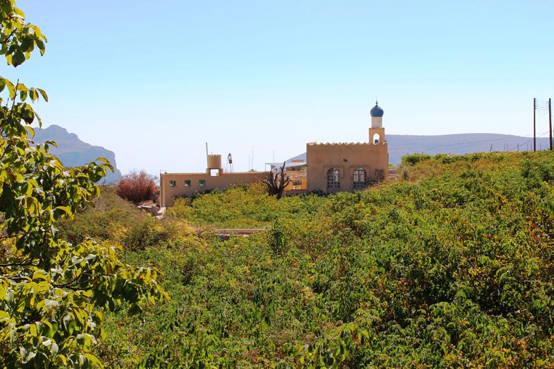 oman-sayq-plateau-moschee-jabal-al-akhdar