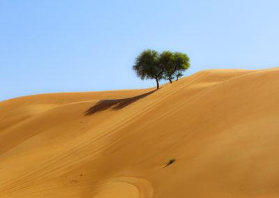 oman-sharqiyah-sands-wueste-baum-fotografie