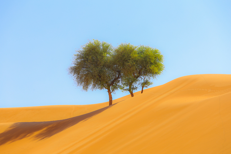 oman-sharqiyah-sands-wueste-vegetation