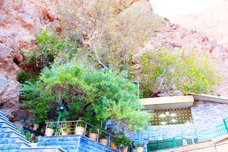 iran-tour-kultur-reise-chek-zarathustra-baum-traene